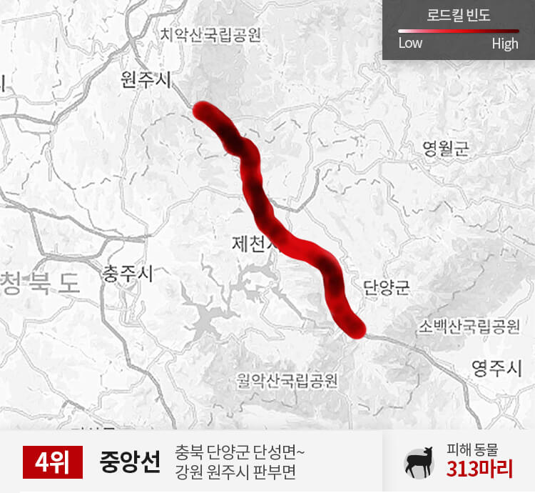 중앙선 250~300km 구간 피해 동물 313마리